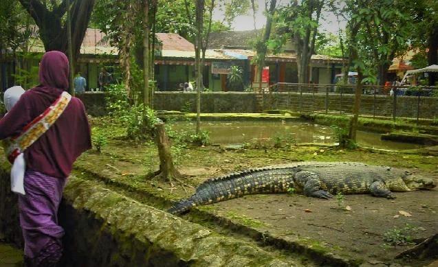 حديقة حيوانات في باندونق اندونيسيا
