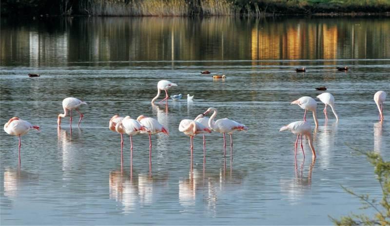 بحيرة كوش جنات من اهم البحيرات في مدينة بورصة تركيا