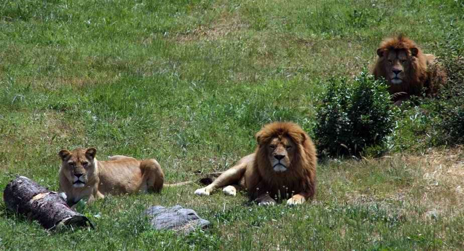 حديقة الحيوانات من اجمل حدائق بورصة تركيا