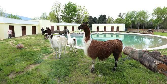 حديقة حيوانات بورصة من اجمل اماكن السياحة في مدينة بورصة تركيا