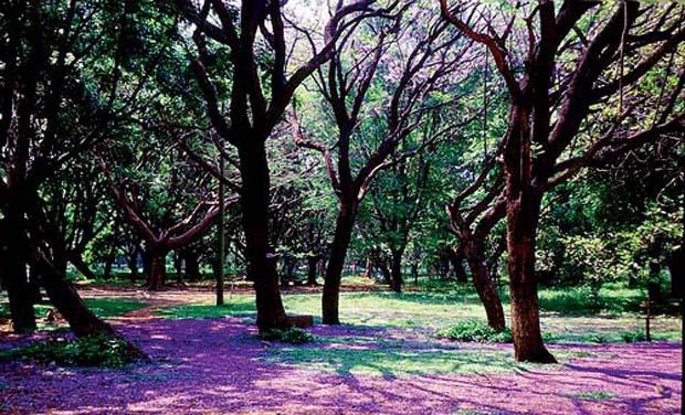 حديقة كوبون بارك بنجلور الهند