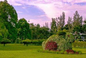 حديقة الزهور في بونشاك اندونيسيا