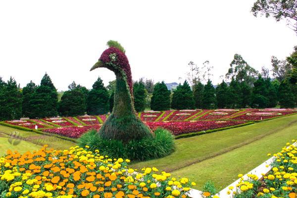 حديقة الزهور من اجمل الحدائق في اندونيسيا بونشاك
