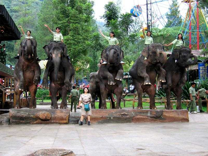 حديقة سفاري بونشاك من اجمل الاماكن السياحية في بونشاك اندونيسيا