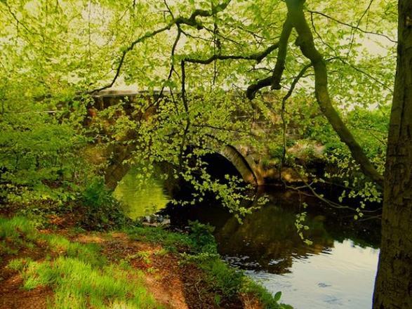 محمية ألكرينجتون وودز في مدينة مانشستر انجلترا