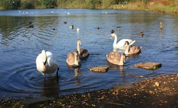 محمية ألكرينجتون وودز من اجمل الاماكن السياحية في مانشستر