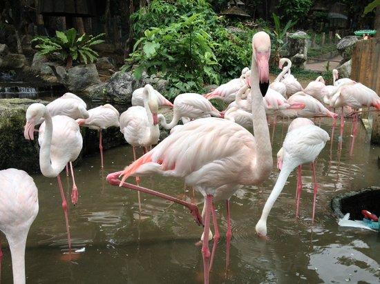 حديقة الحيوانات من افضل اماكن السياحة في شنغماي