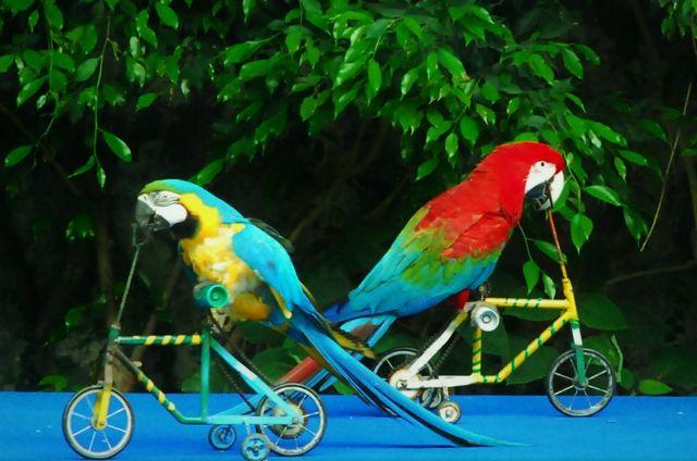حديقة الحيوانات من افضل الاماكن السياحية في شنغماي