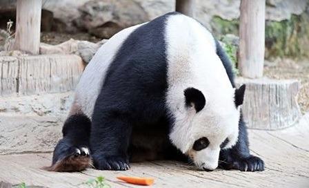 حديقة حيوان شنغماي