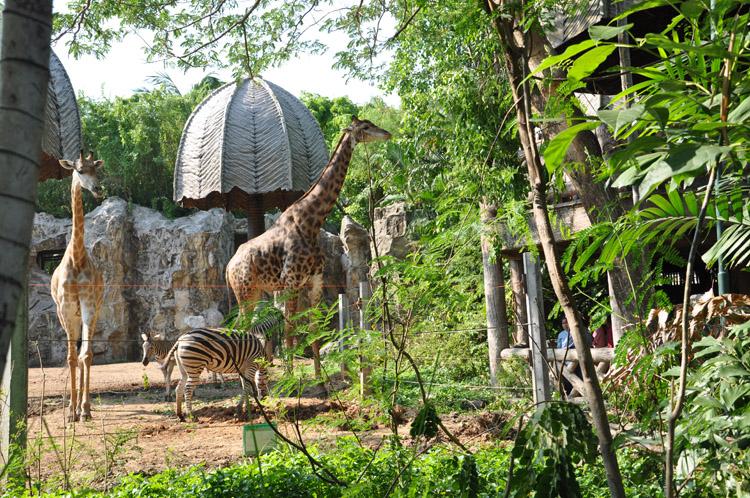 حديقة حيوانات دوسيت من اجمل اماكن السياحة في بانكوك تايلاند