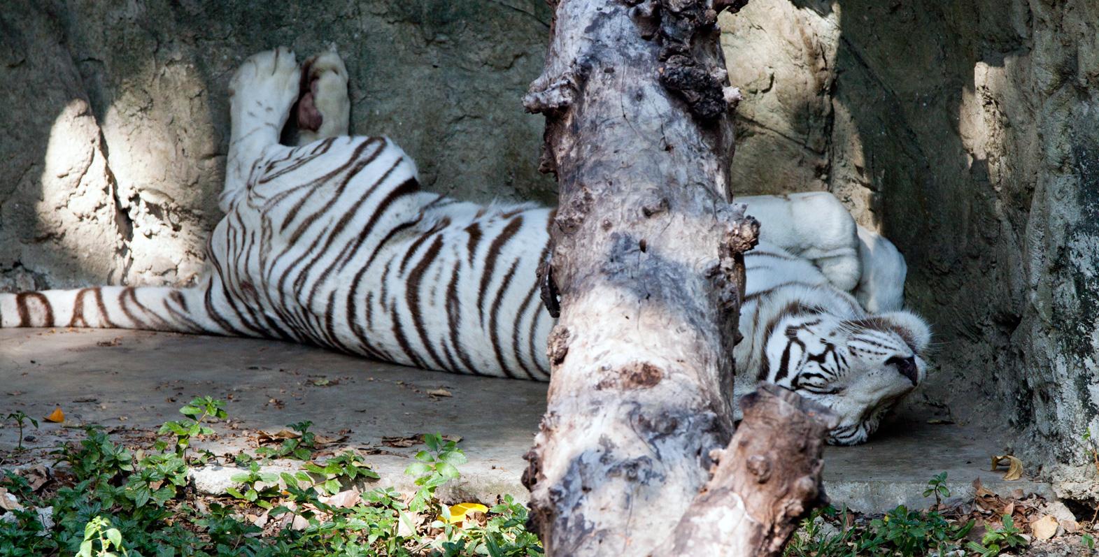 حديقة الحيوانات في بانكوك