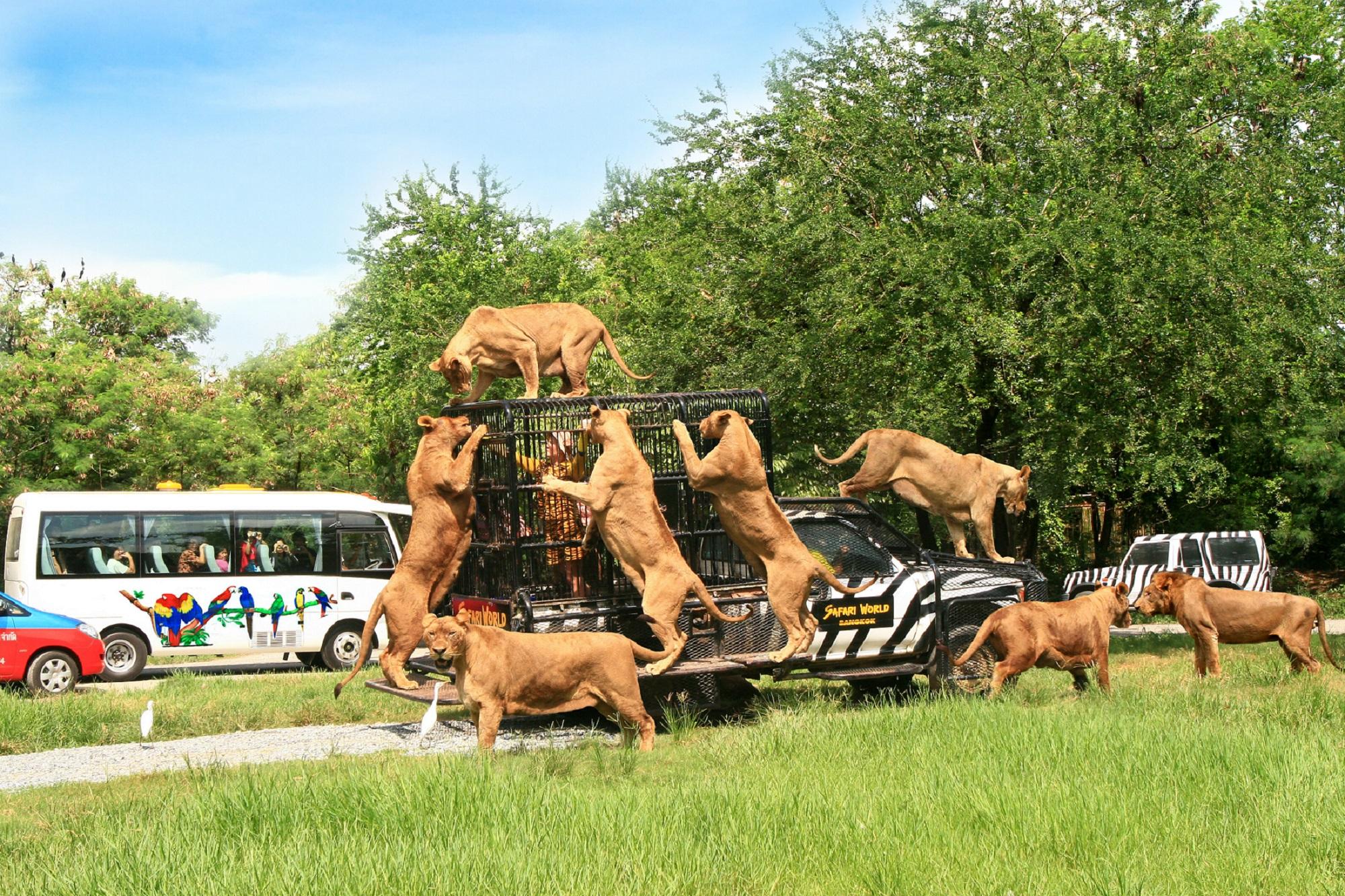 اماكن السياحة في بانكوك - Safari Park Bangkok