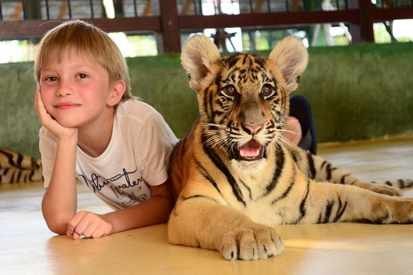 مملكة النمور في بوكيت
