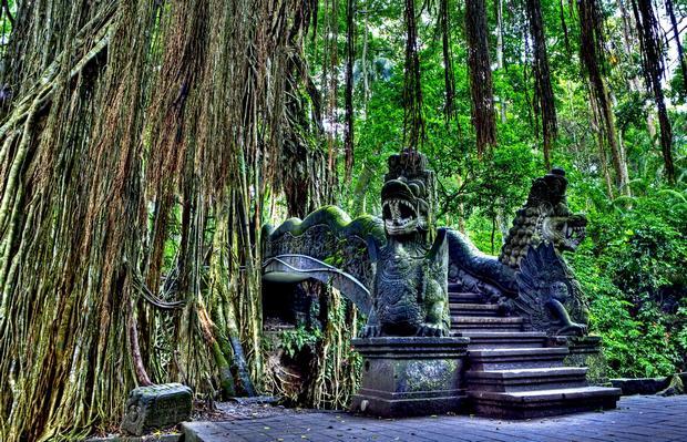 غابة القرود بالي