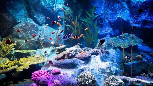 عالم تحت الماء من اجمل اماكن السياحة في بتايا تايلاند