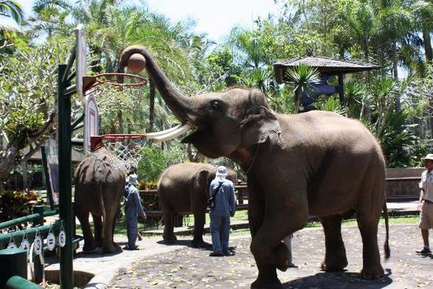 حديقة سفاري بالي من اجمل الاماكن السياحية في بالي اندونيسيا