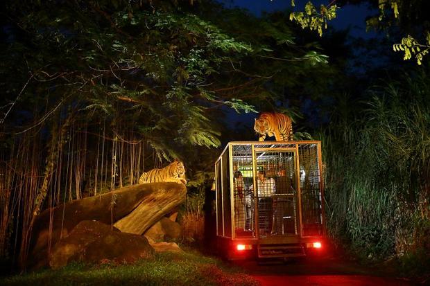 حديقة سفاري بالي من اجمل حدائق بالي اندونيسيا