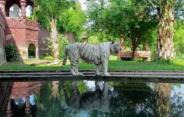 تعد حديقة السفاري في بالي من اشهر الاماكن السياحية في بالي اندونيسيا
