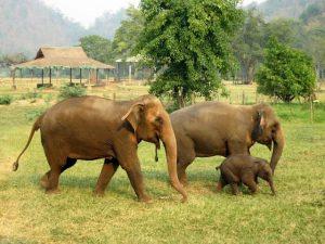 تعرف في المقال على افضل الانشطة السياحية في حديقة الفيلة في شنغماي ، بالإضافة الى افضل فنادق شنغماي القريبة منها