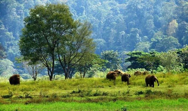 حديقة الفيلة شنغماي تايلاند