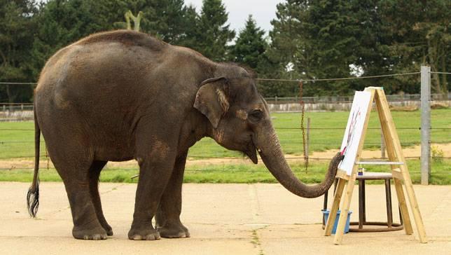 حديقة الفيلة في تايلاند شنغماي