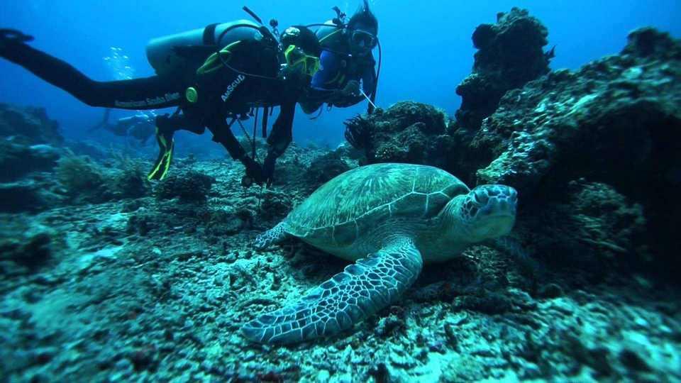الغوص في جزر جيلي من اجمل الانشطة السياحية في اندونيسيا لومبوك