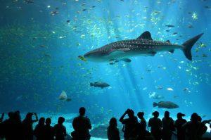 تعرف في المقال على افضل الانشطة السياحية في عالم المحيط بانكوك ، بالإضافة الى افضل فنادق بانكوك القريبة منه