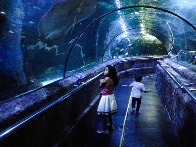 عالم البحار من اجمل اماكن السياحة في جاكرتا اندونيسيا