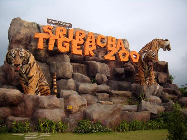 tiger zoo in pattaya, thailand