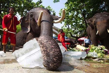 حديقة النمور بتايا تايلاند