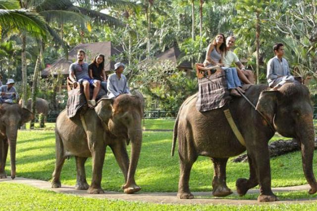 حديقة النمور في تايلاند بتايا