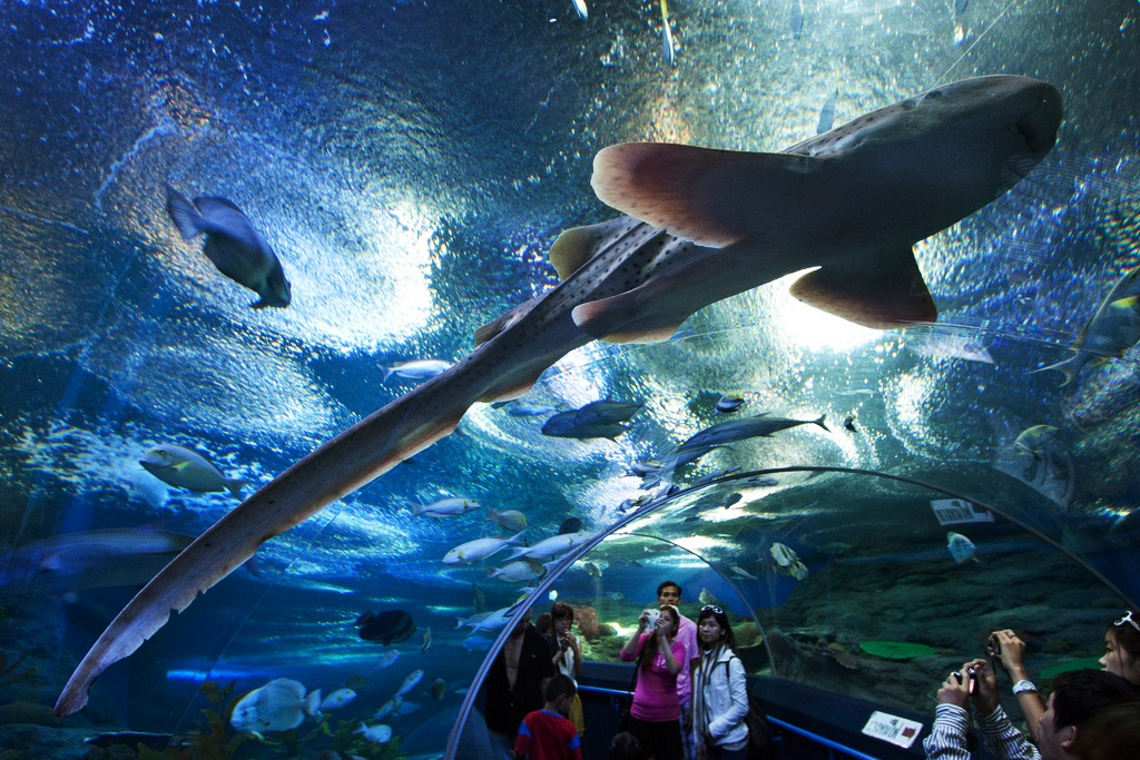 underwater world, pattaya
