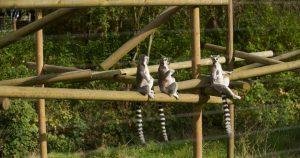حديقة برمنجهام للحياة البرية تعد من افضل اماكن السياحة في برمنجهام انجلترا