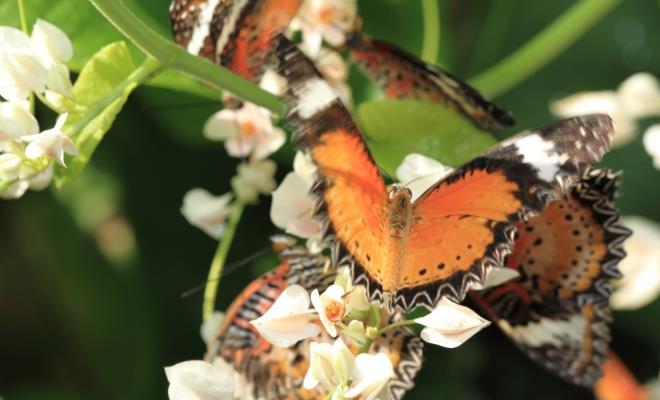 حديقة الفراشات في جزيرة بينانج