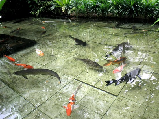 حديقة الفراشات من افضل اماكن سياحية في بينانج