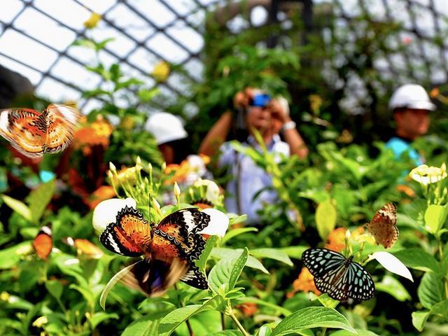 حديقة الفراشات في ماليزيا بينانج