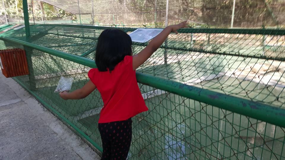 حديقة التماسيح في لنكاوي من اجمل اماكن السياحة في ماليزيا