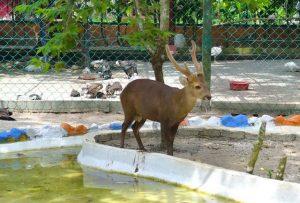 تعرف في المقال على افضل الانشطة السياحية عند زيارة حديقة الحياة البرية في لنكاوي ، بالإضافة الى افضل فنادق لنكاوي القريبة منها