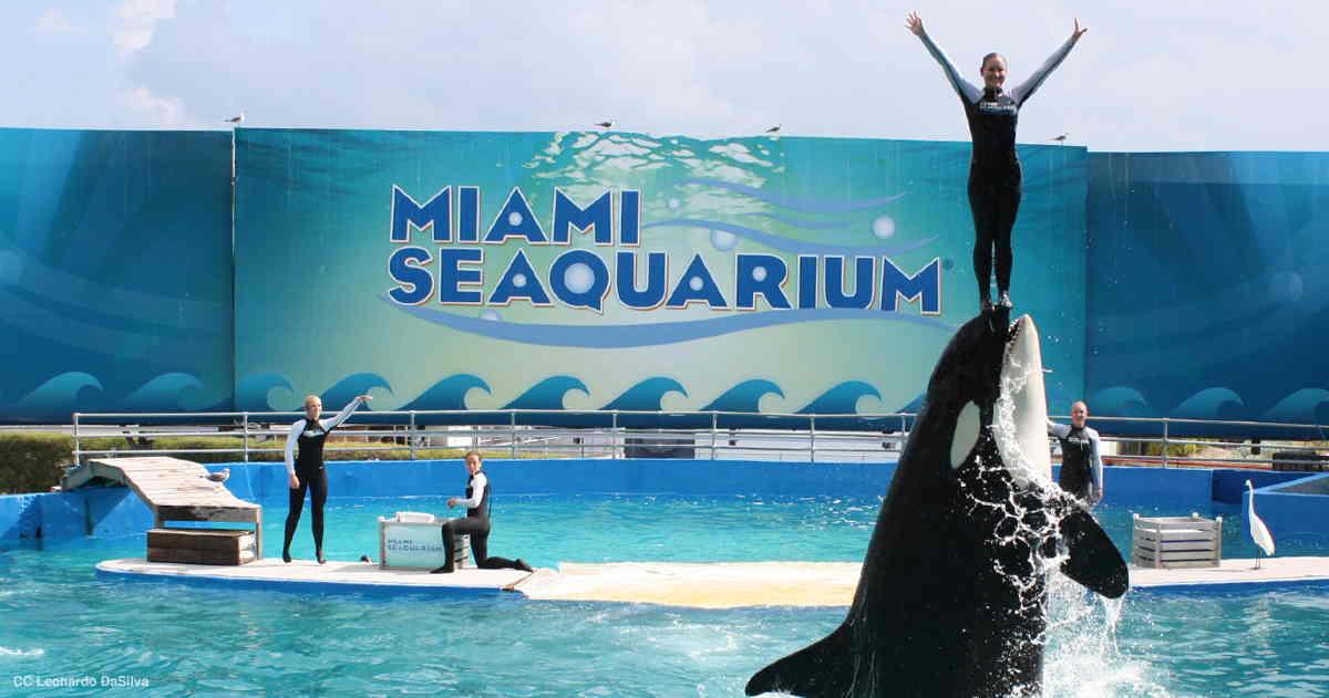 حوض أسماك ميامي - الاماكن السياحية في ميامي