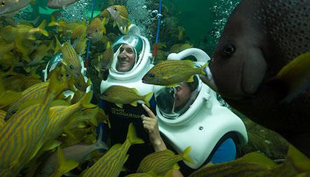 حوض اسماك ميامي من اجمل اماكن سياحية في امريكا