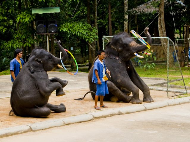 السياحة في كوساموي تايلند