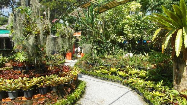 حديقة حيوانات بوكيت تايلاند