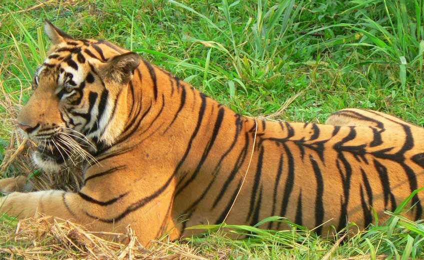 حديقة حيوان راغونان من اجمل حدائق جاكرتا اندونيسيا