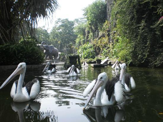 حديقة حيوان راغونان من اجمل حدائق السياحة في جاكرتا اندونيسيا