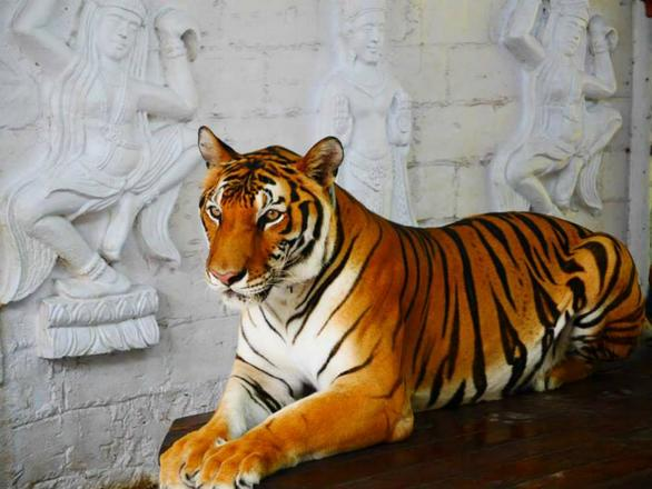 ساموي اكواريوم وحديقة النمور كوساموي