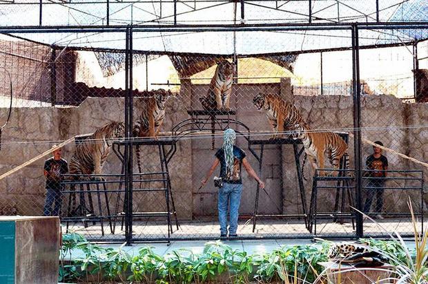 ساموي اكواريوم وحديقة النمور في تايلاند كوساموي