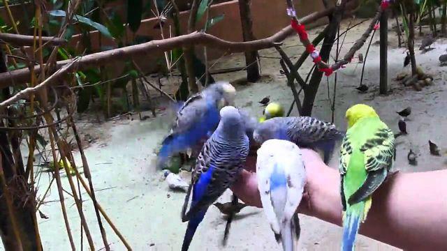 حديقة الحياة البرية في ماليزيا لنكاوي