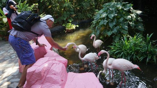 حديقة الحياة البرية في لنكاوي من افضل الاماكن السياحية في ماليزيا
