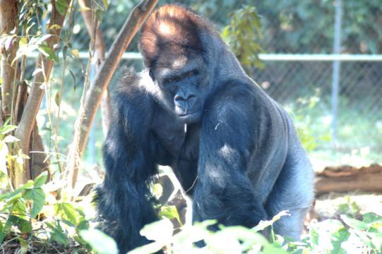 غابة القرود في ميامي من افضل اماكن السياحة في امريكا