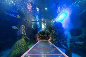 المركز الوطني للحياة البحرية من اشهر الاماكن السياحية في برمنجهام انجلترا